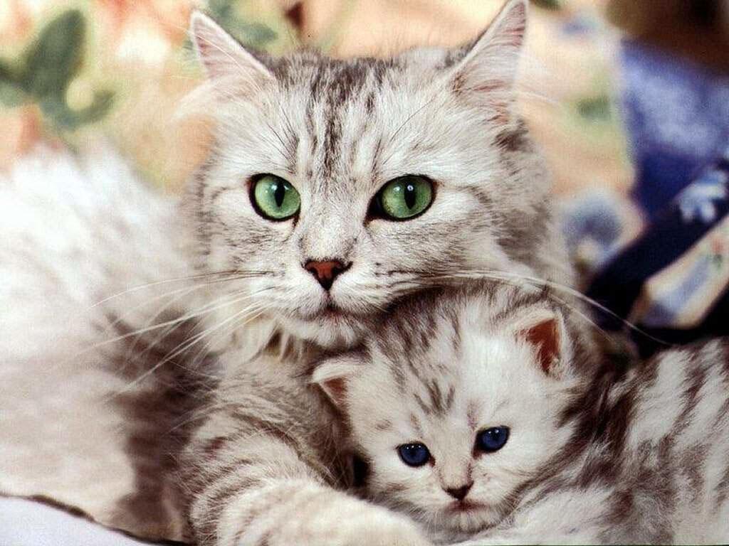 как завести кошку