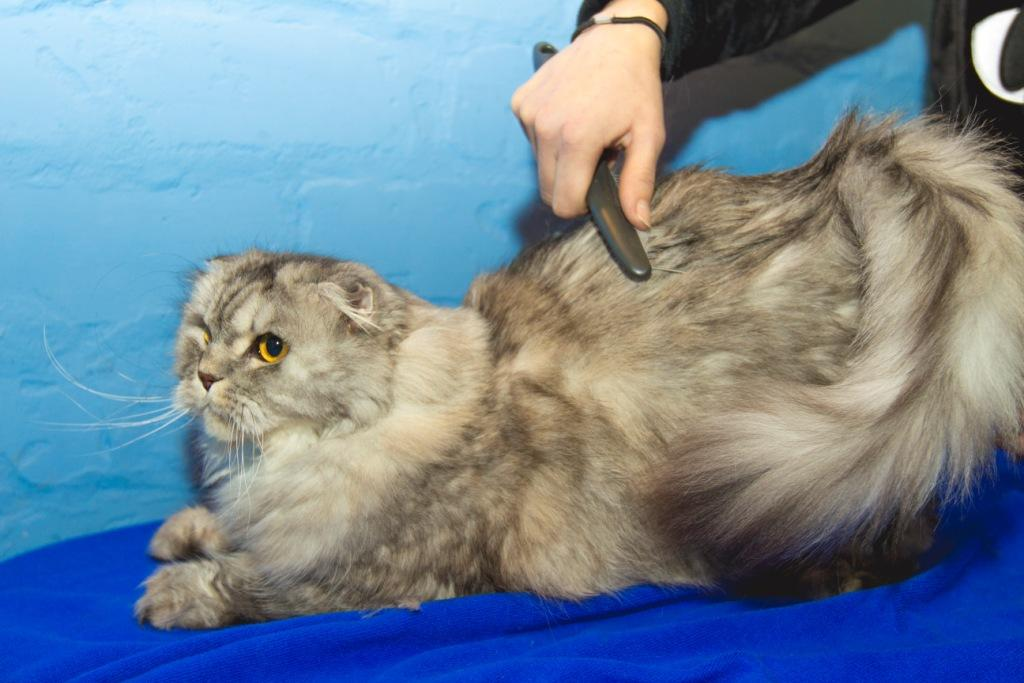 салон красоты для котов