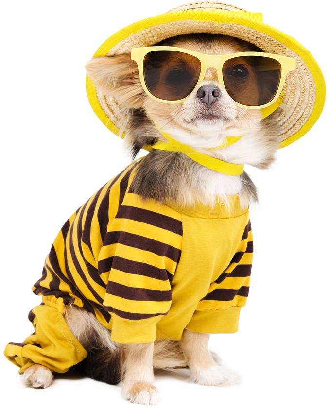 Dog City - безупречный уход за вашим питомцем