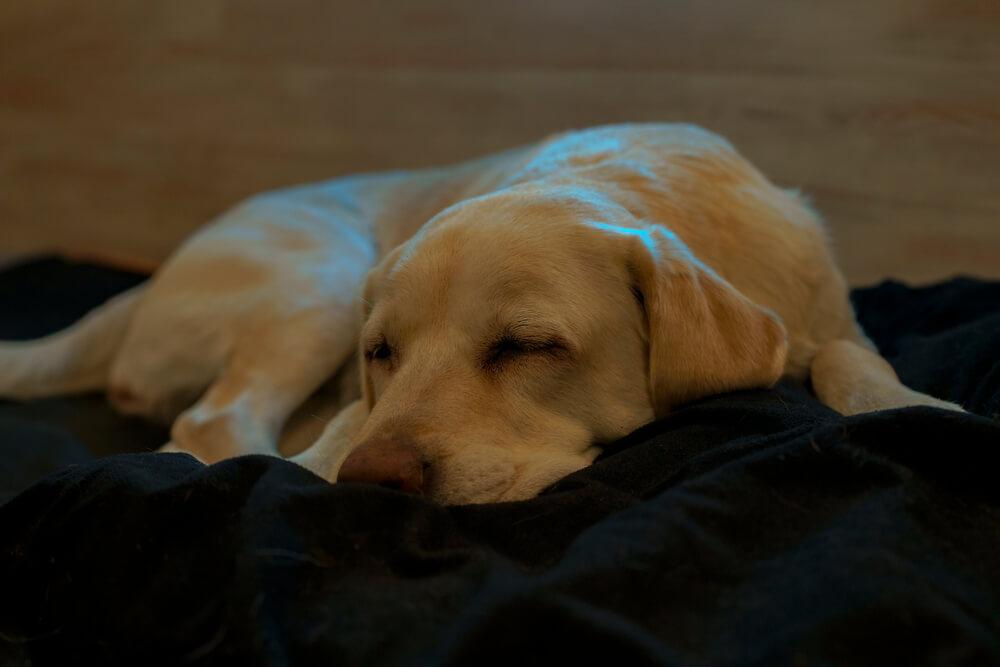 гостиница для собак киев цена