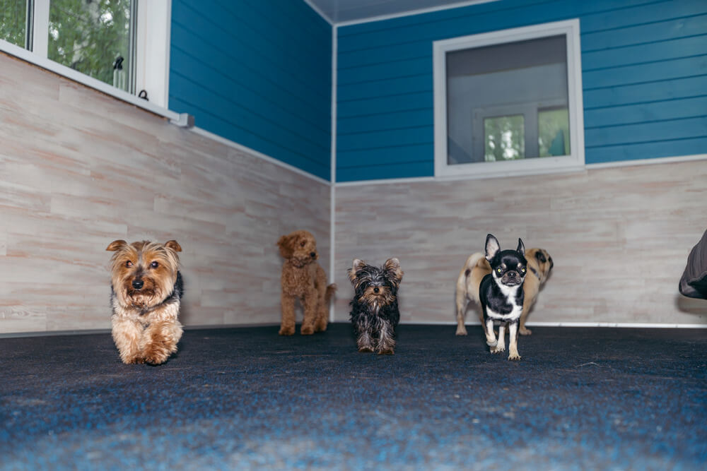 отель для собак киев цена