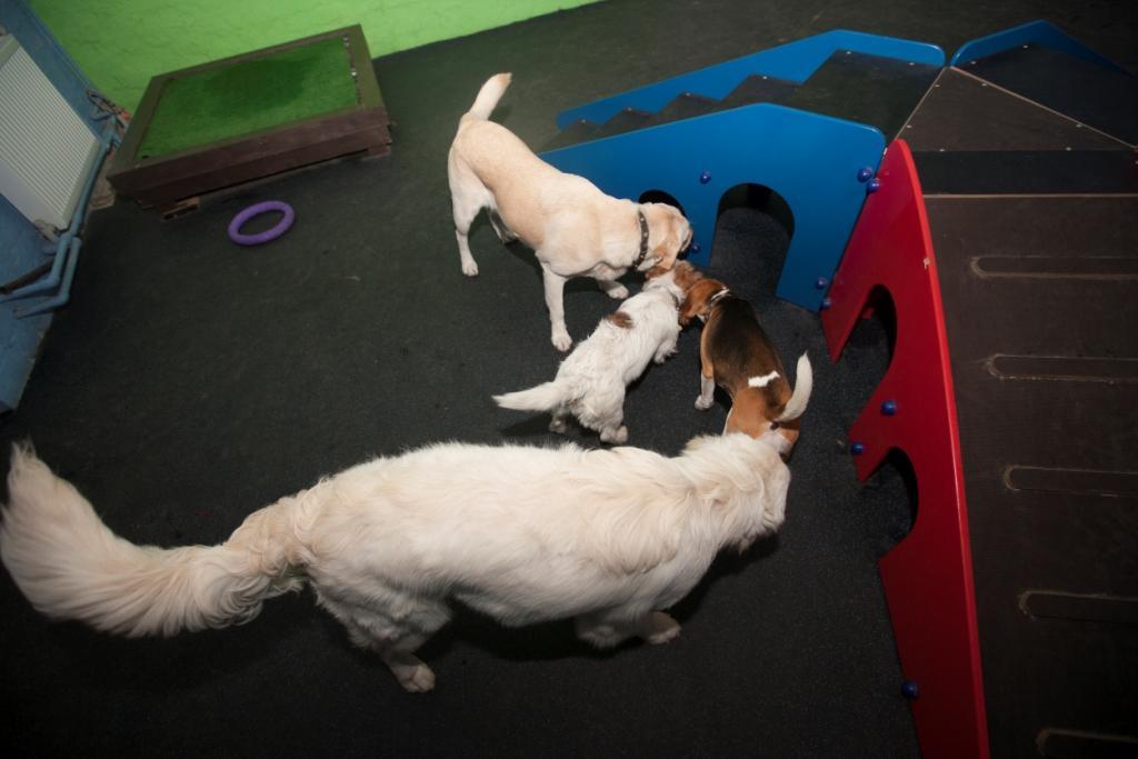 садик для домашних животных киев ВДНХ