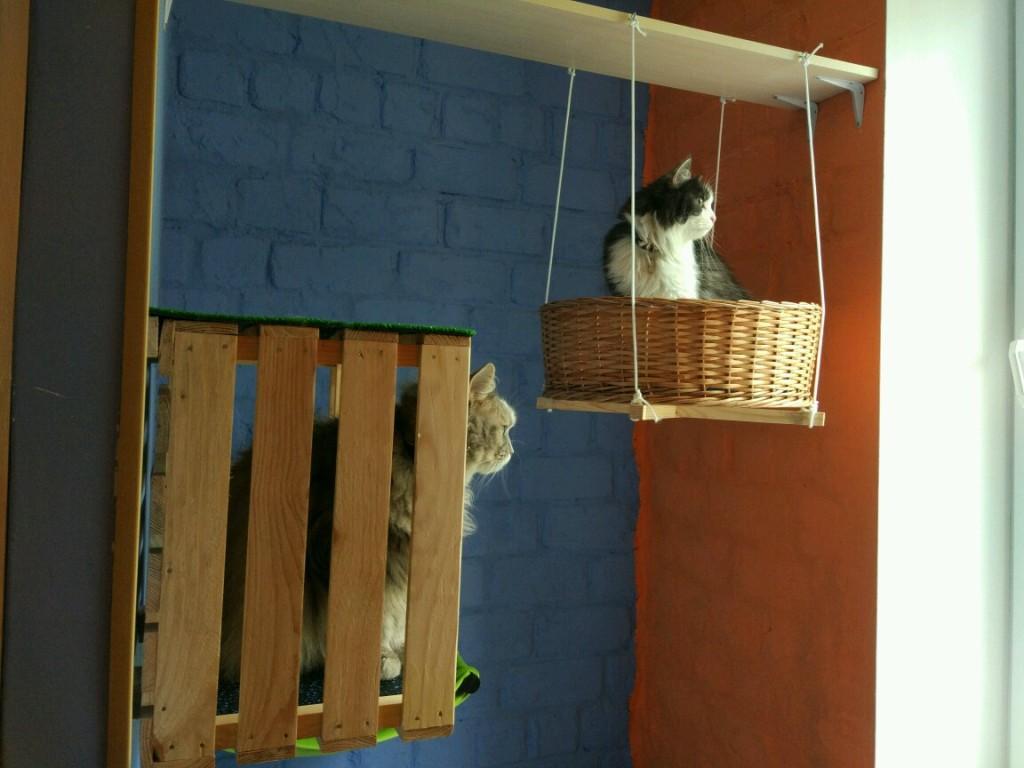 гостиница для котов и кошек киев ВДНХ