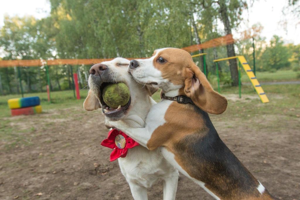 детский сад для домашних животных