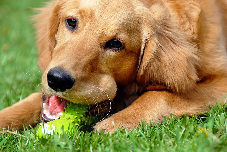 правильное питание у собак