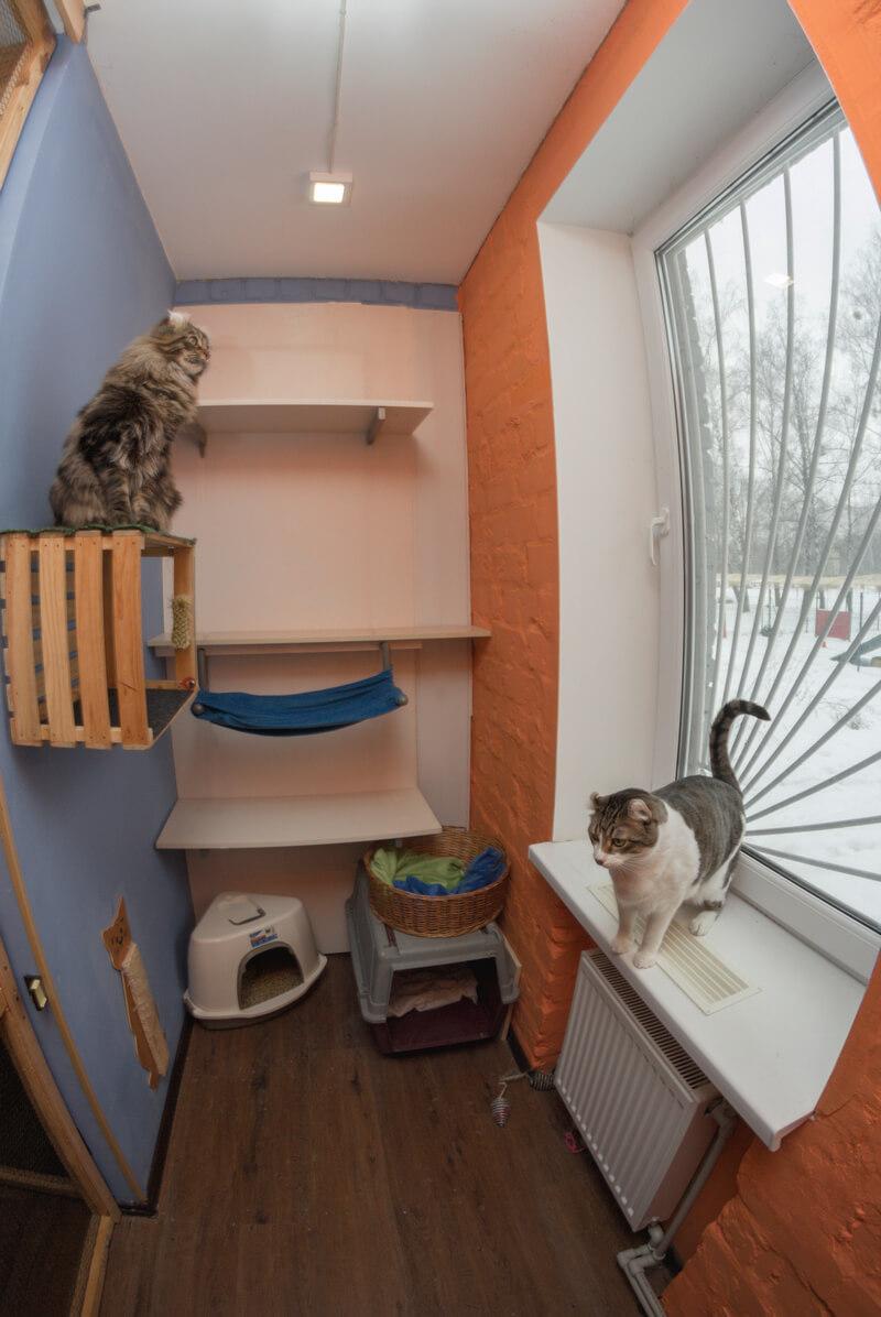 гостиница для кошек киев голосеевский район