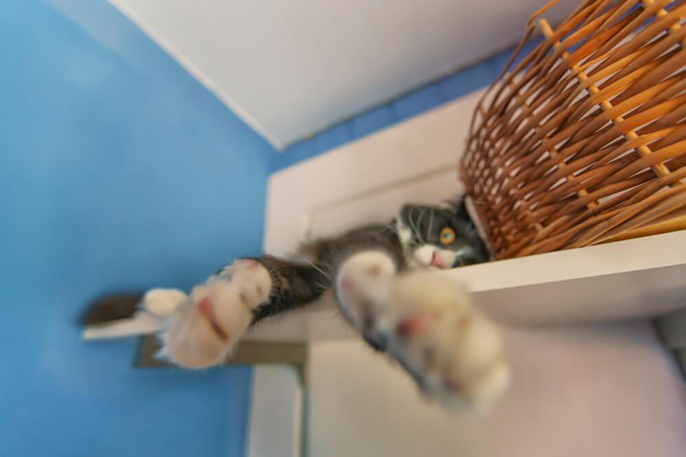 гостиница для котов и кошек в Киеве ВДНХ