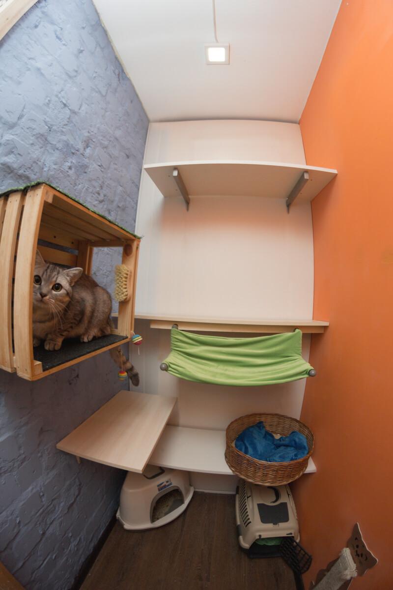 гостиницы для кошек в киеве