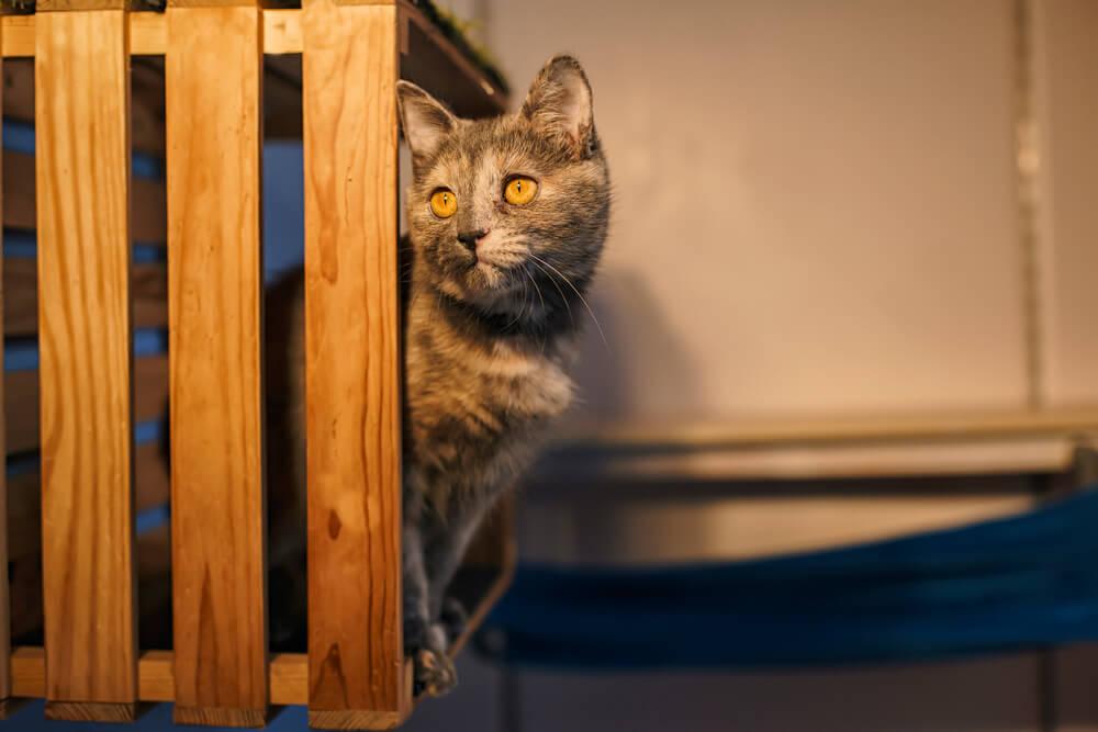 отель для кошек Киев