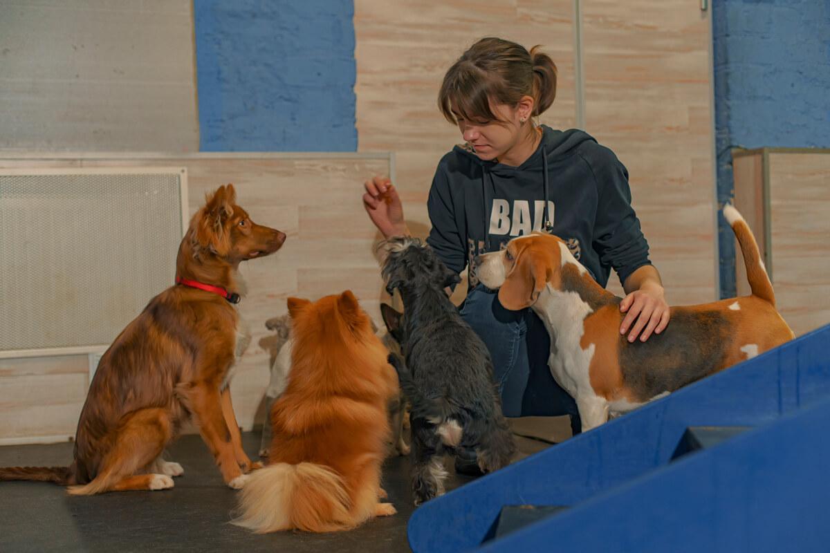 садик для собак