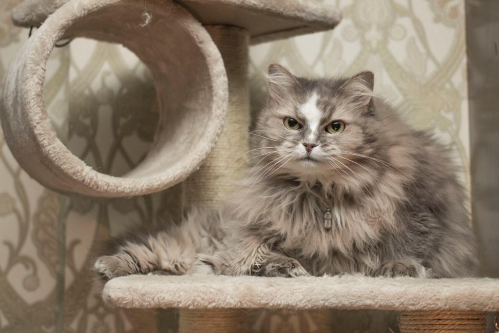 беременность кошки - признаки