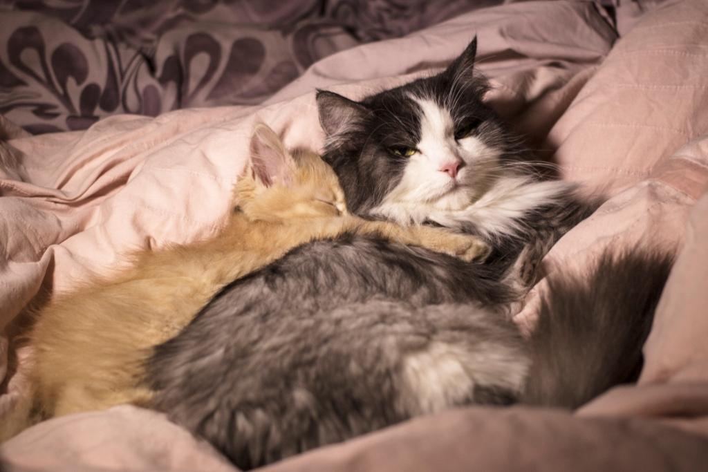 как спариваются кошки