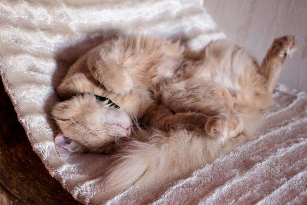 все о размножении кошек