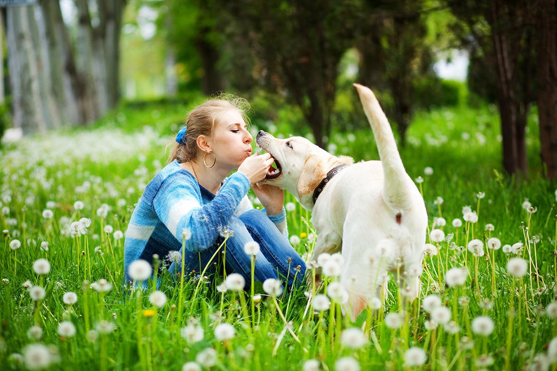 зачем нужен садик для собак