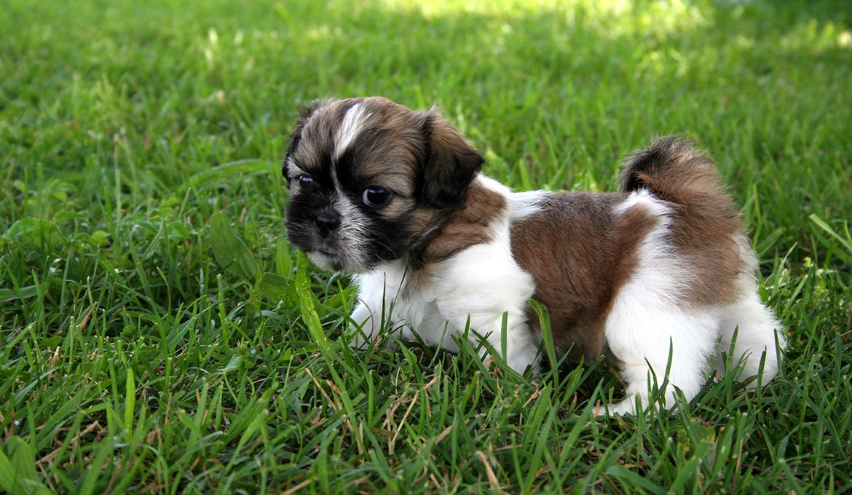 полезные свойста детского садика для щенков