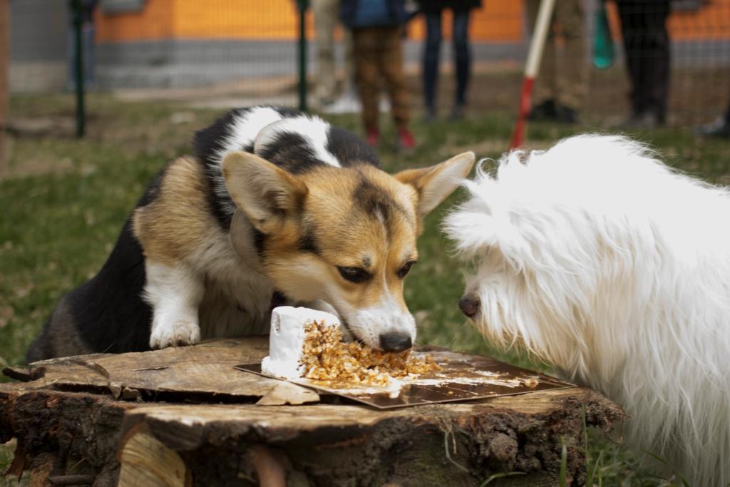 собака болеет если отбирать еду