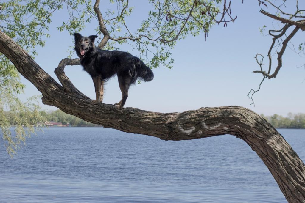правильное развитие собаки