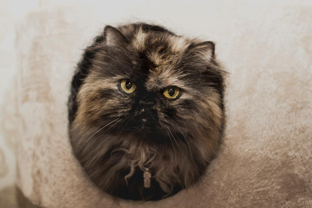 уши котов и кошек о чем говорят