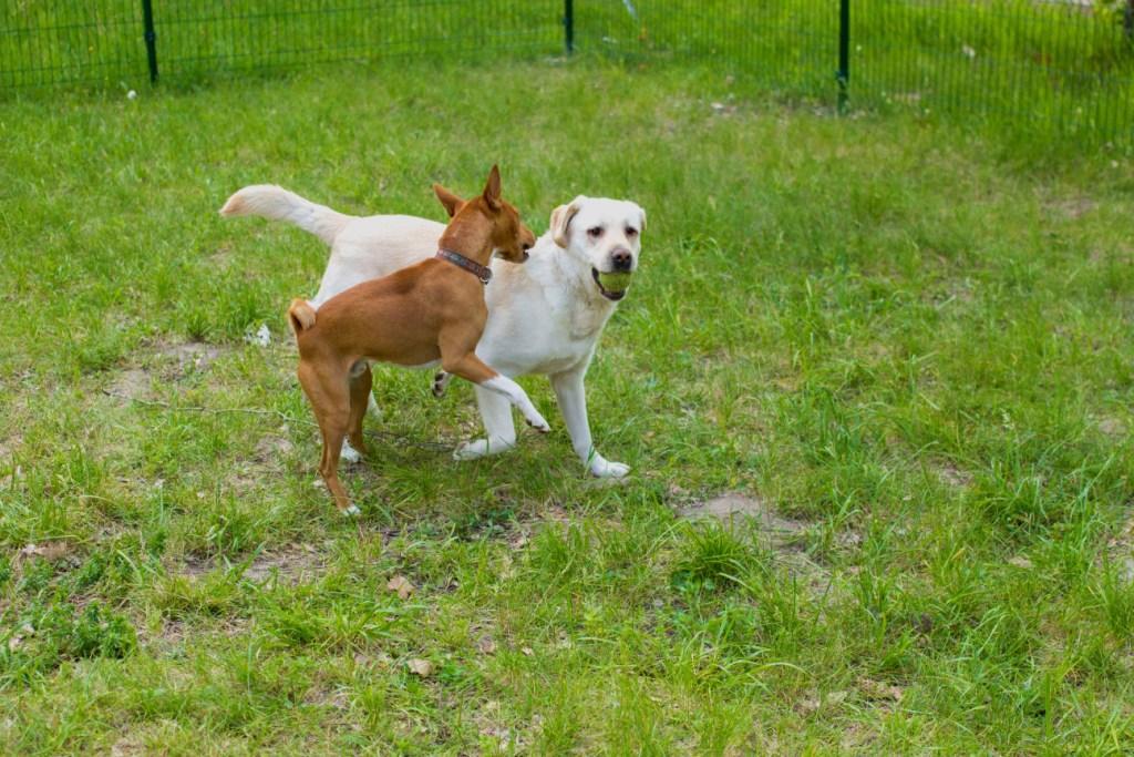 аллергия у собаки как помочь питомцу