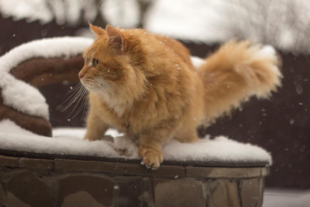 хвост у котов и кошек о чем говорит