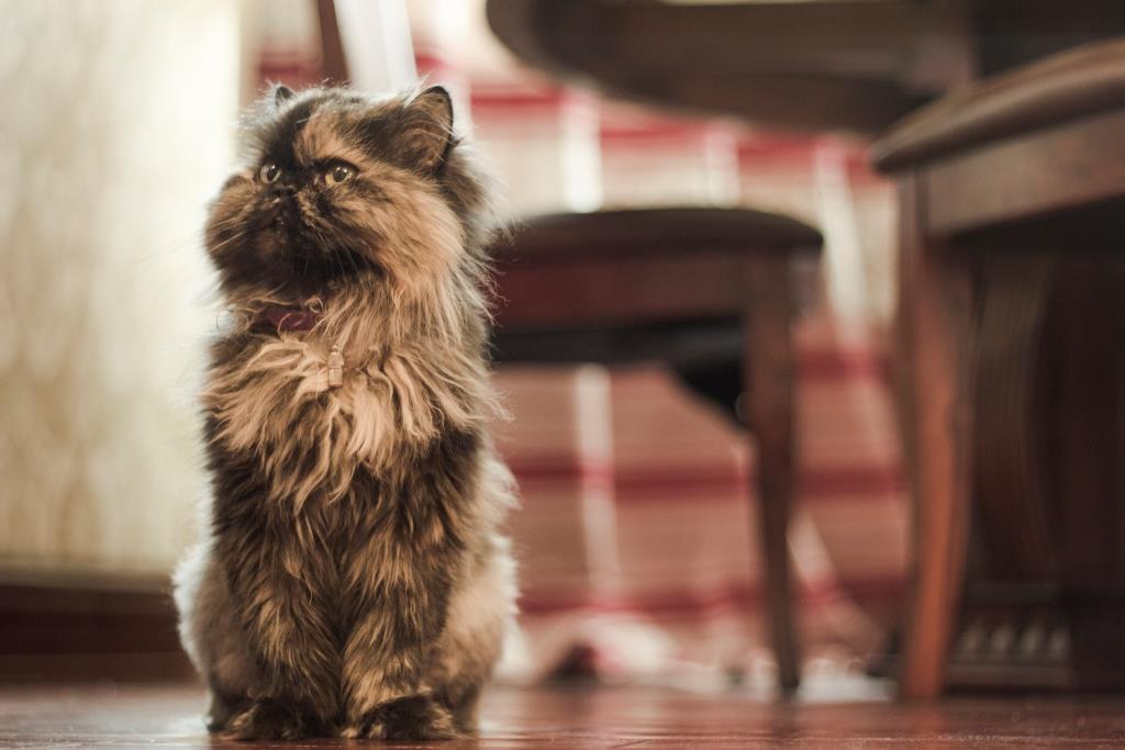 о чем говорит язык иела котов и кошек
