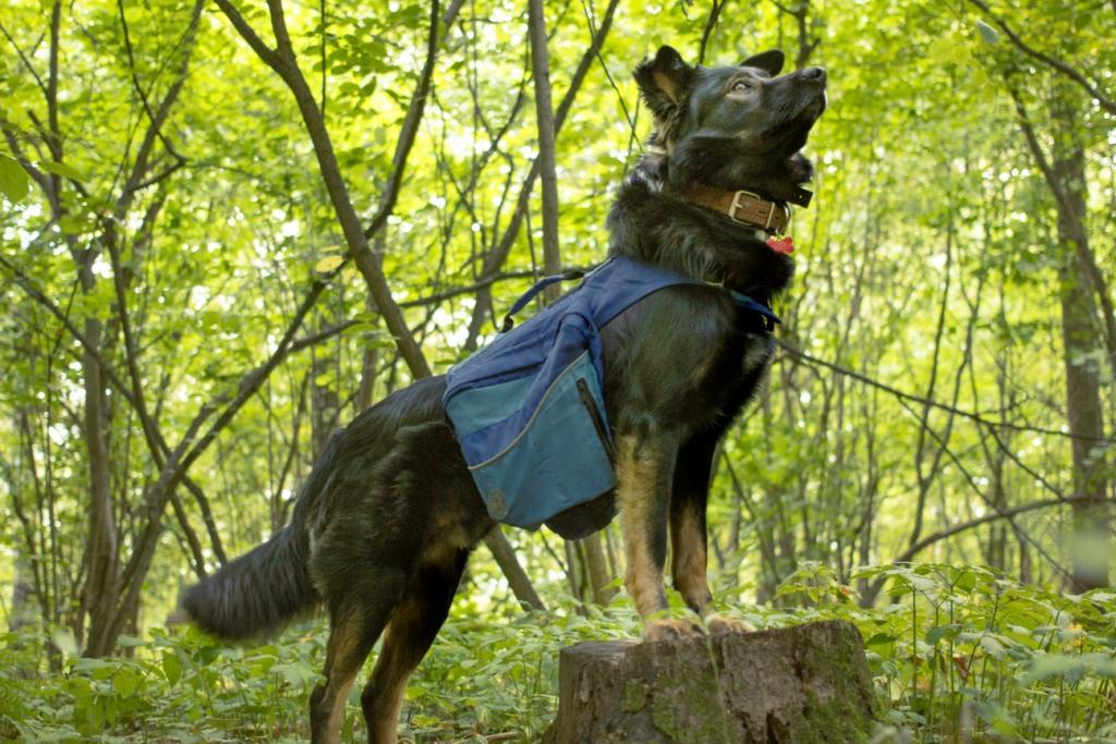 как понять умная собака или нет