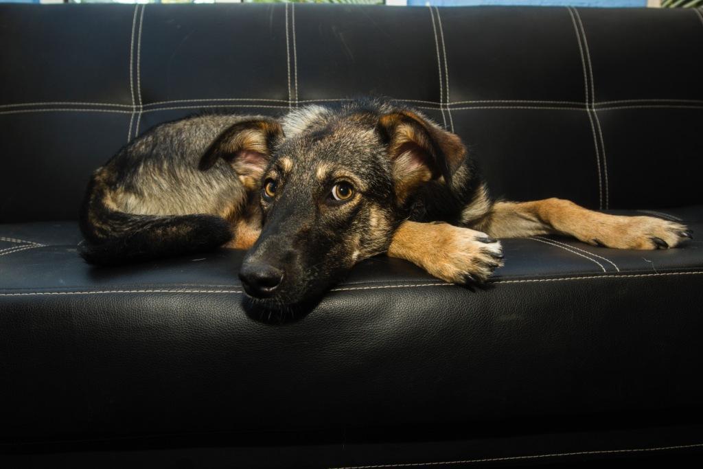 поведение собаки после кастрации - к чему готовиться