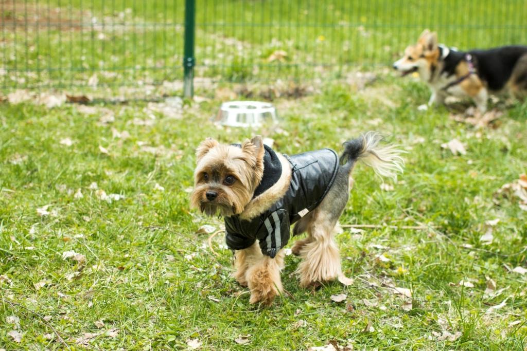 как воспитывать собаку правильно