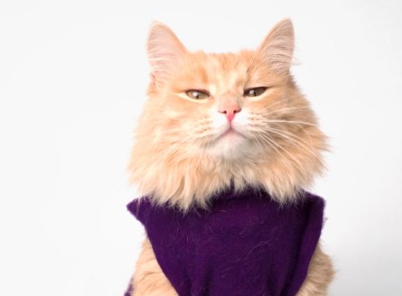 что нужно чтобы кошки жили дольше
