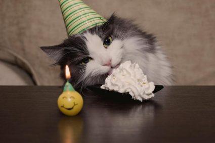 Советы, как удлинить жизнь кота
