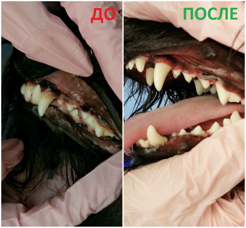 зубной камень у собаки - фото