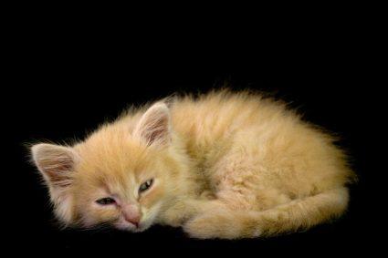 Почему кот залазит на вас поспать?