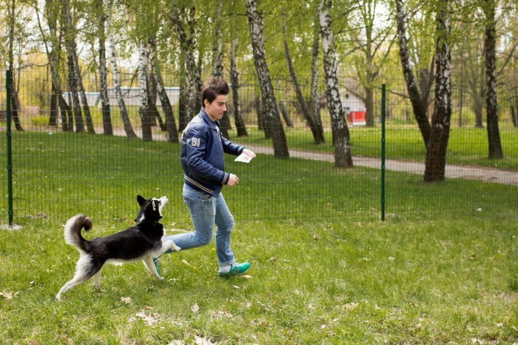 собака альфа-самец
