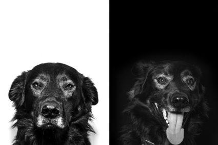 Как обучать доминантную собаку