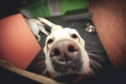 Важность социализации собаки