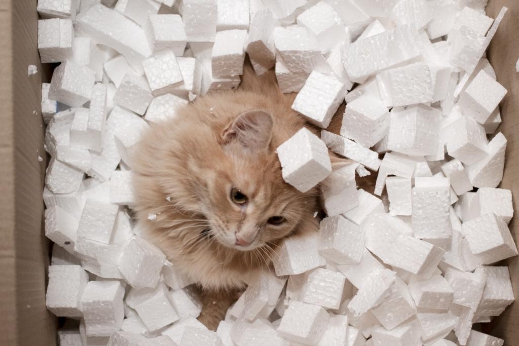 кто приручил кошек