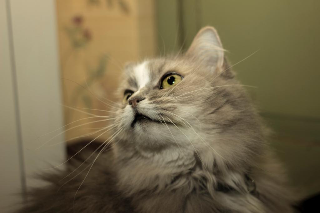 как одомашнились коты - фото 1