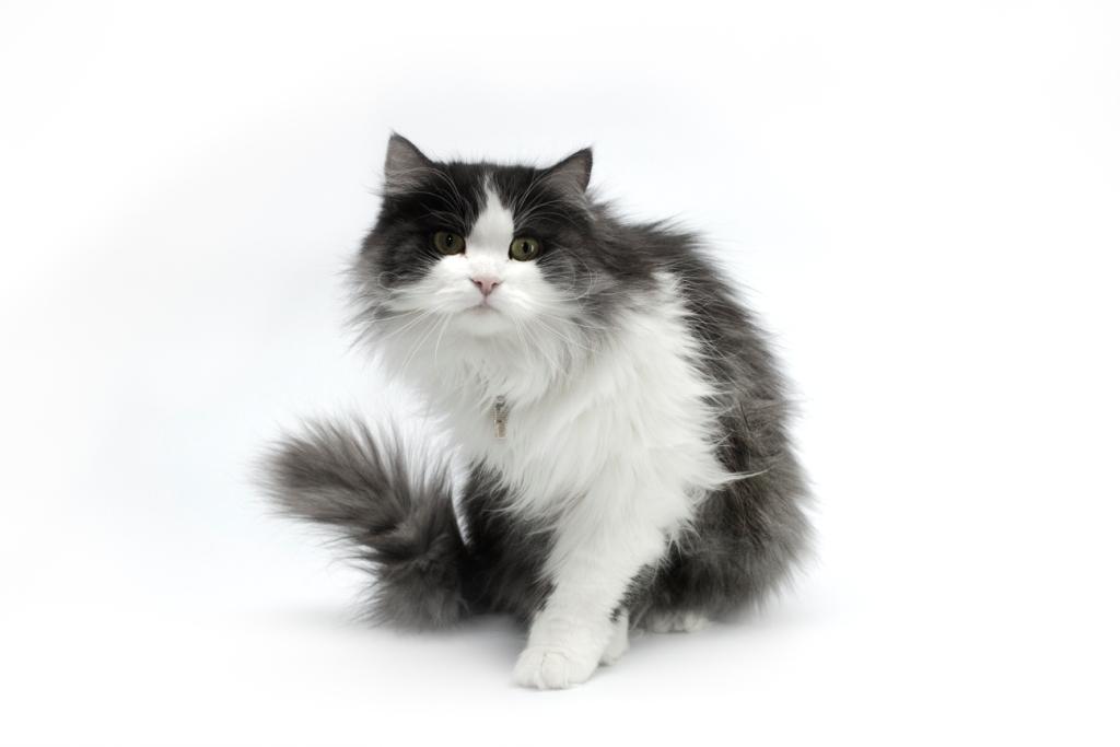 приручение котов