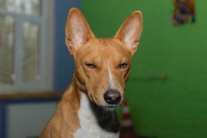 Как отучить собаку гавкать на прохожих
