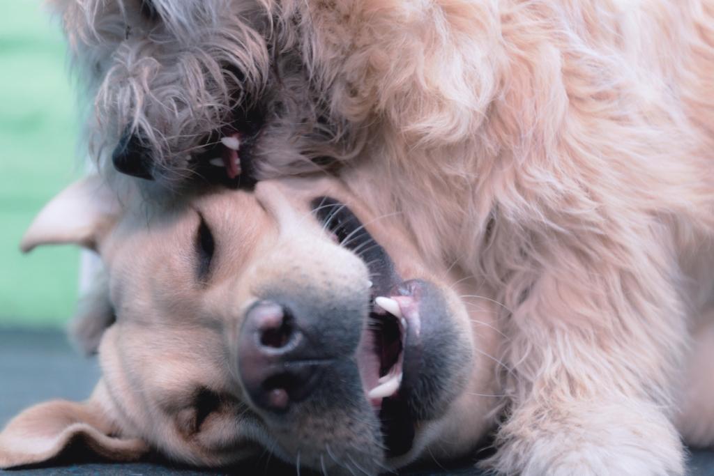 как отучить собаку лаять на людей советы