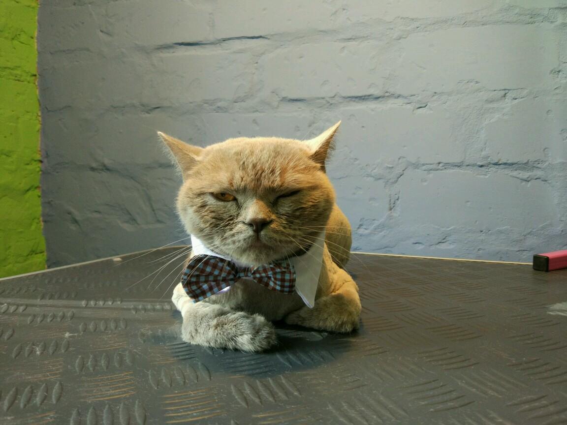 Плохое поведение котов что делать