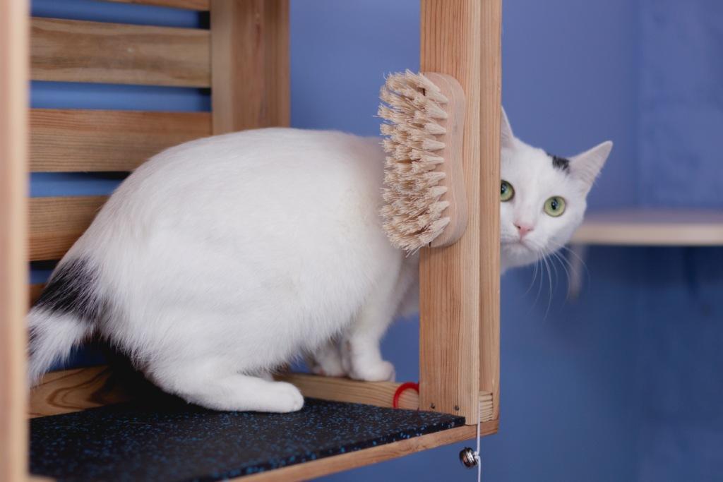кот сильно грызет мебель что делать