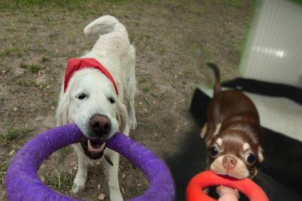 Как научить собаку приносить какой-то предмет, так, чтобы она возвращала его владельцу
