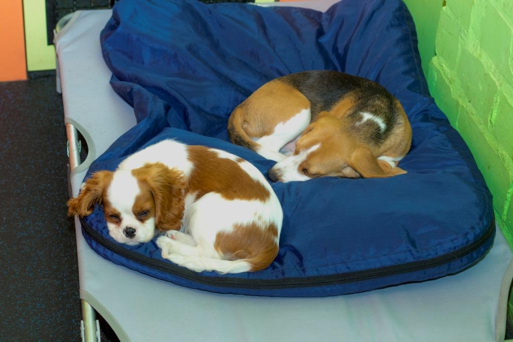 собака спит свернувшись клубком что это значит