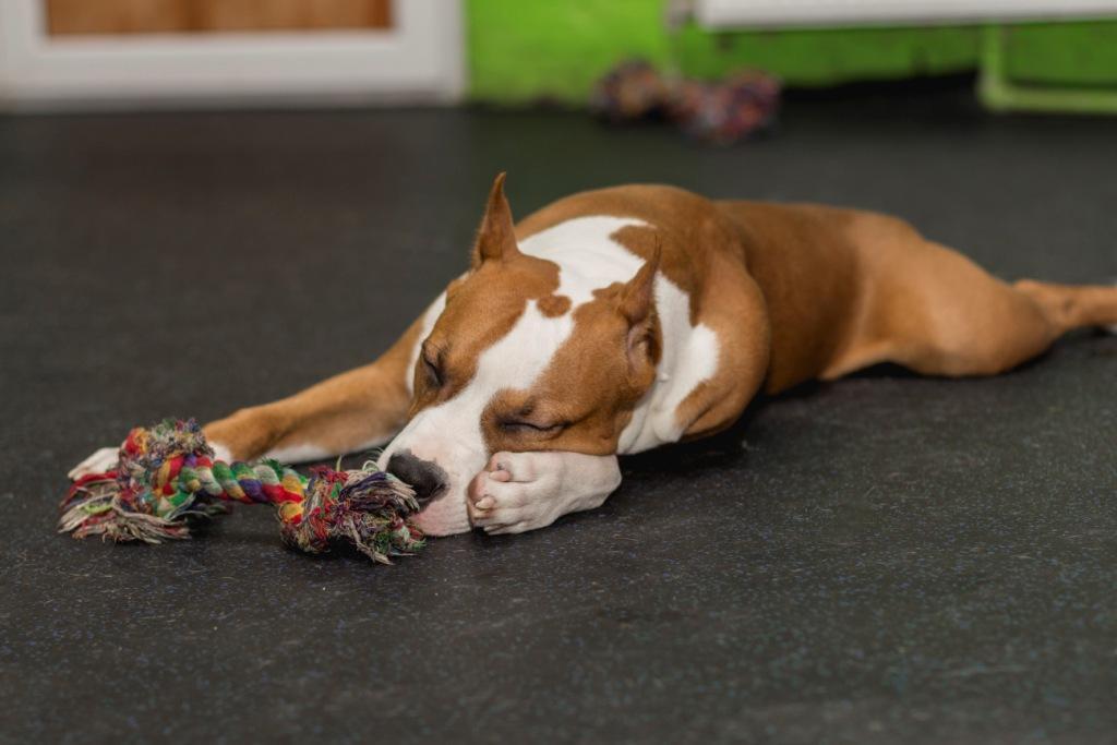 собака спит вытянувшись что это значит
