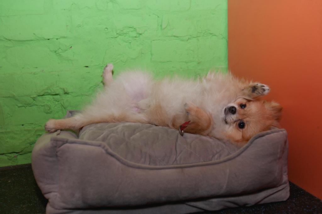 собака бежит во сне что это значит