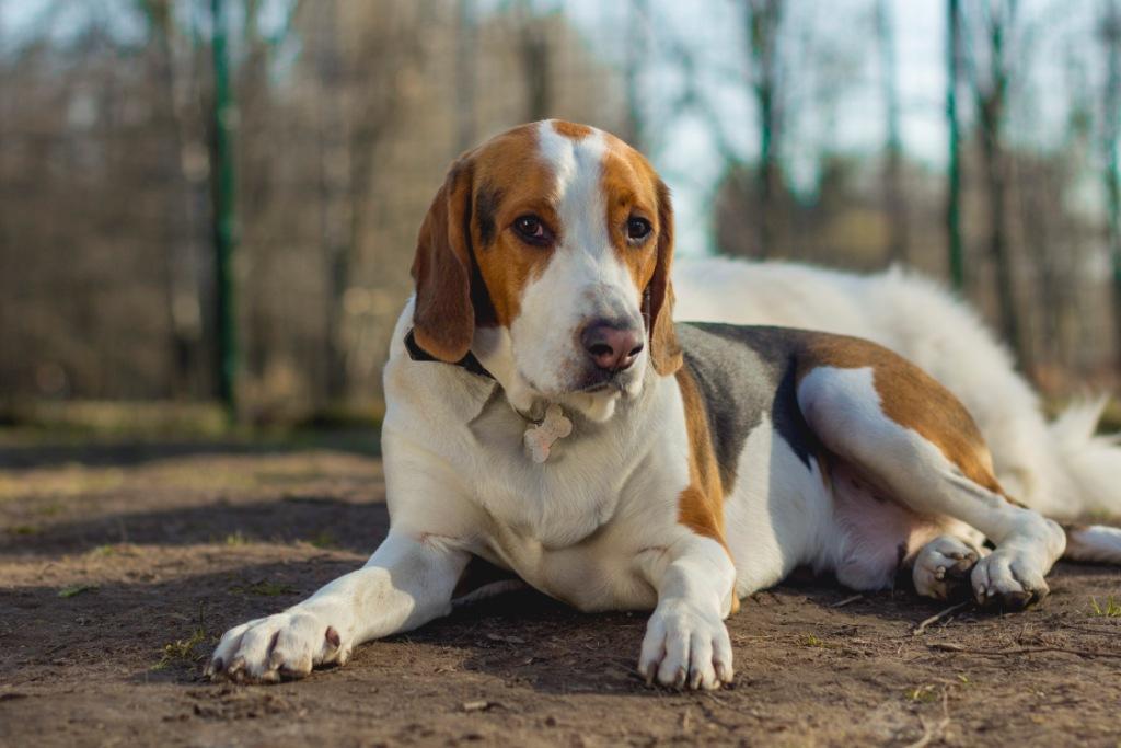 воспитание собаки как делать правильно