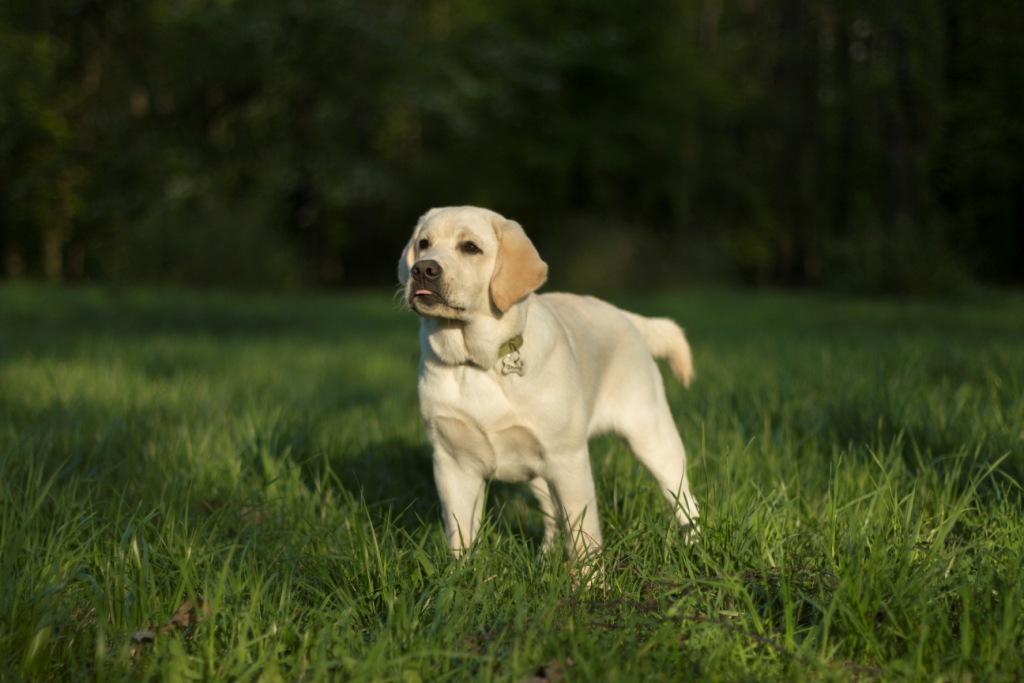 собака ест траву что делать