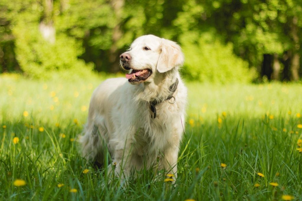 собака кушает траву и рвет что делать