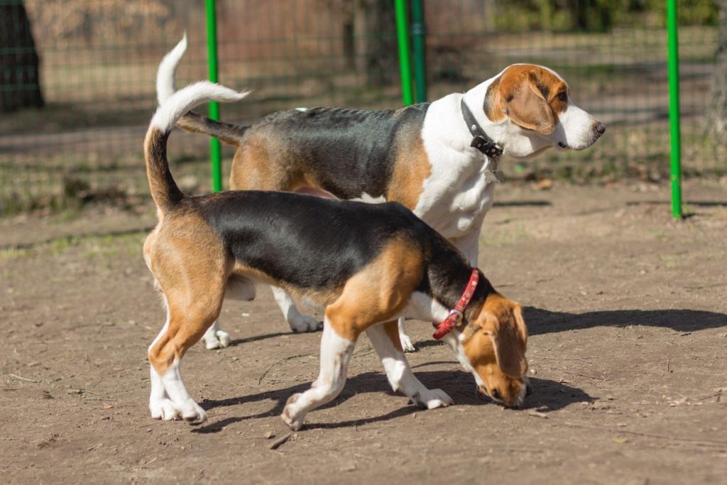 социализация - общение собаки с другими собаками